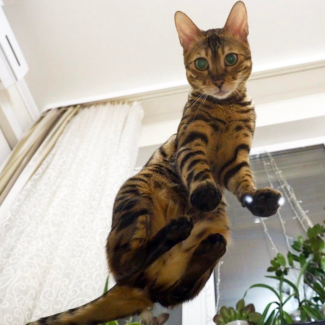 52 Amazing Cat Photography Tips for Incredible Photos