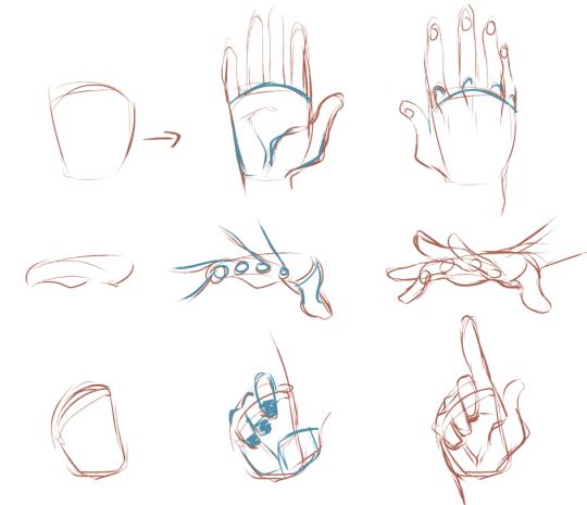 Pin von Tails cat auf k | Pinterest | Hand und fuß, Anatomie und Hände