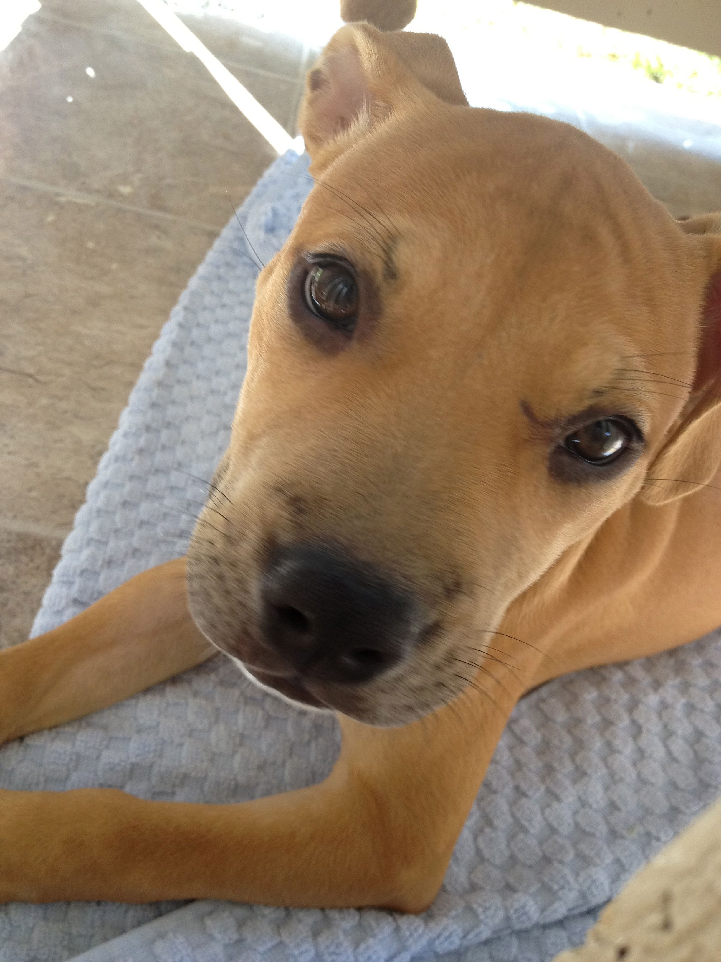 The Puppy Stop And Adopt Reviews Ideas