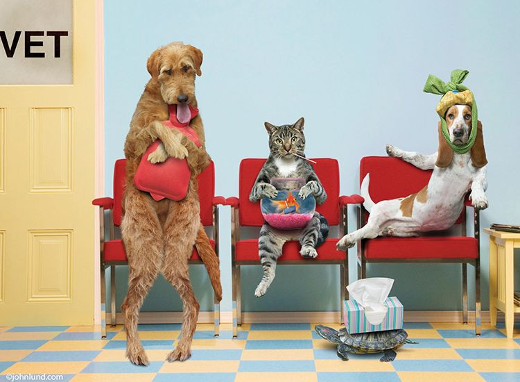 Ailing Pets In The Vet S Waiting Room As A Humorous Get Well Card Www Johnlund Com Animal Antics Pets First Animals