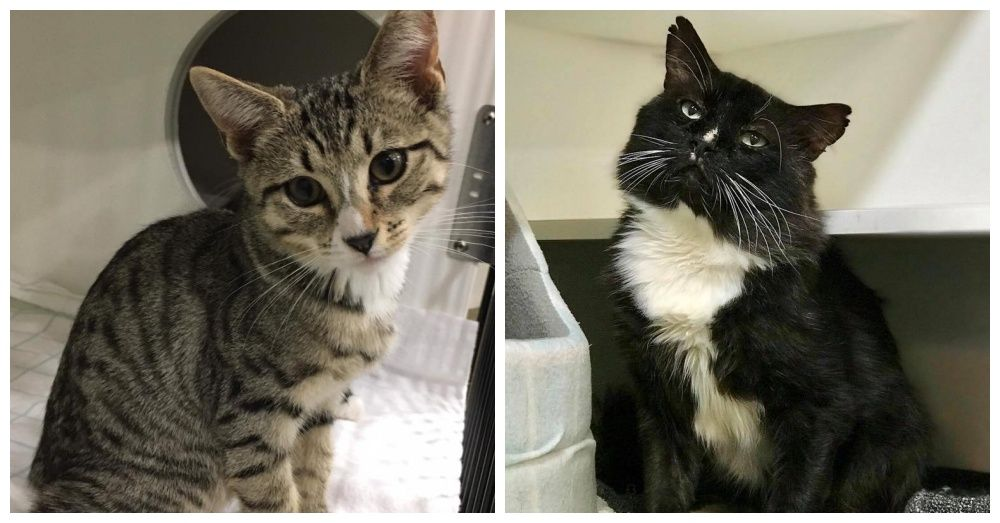 Cat Haven Shelter In Crisis After Receiving 80 Cats In One Day Cats Animal Rescue Your Pet