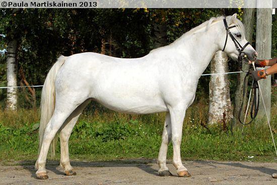 Berkenrode's Mona Lisa, Welsh Mountain mare