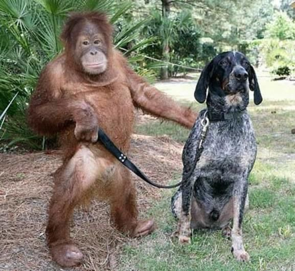 Adorable Animal Friendships That Break The Species Barrier | Positive Daily