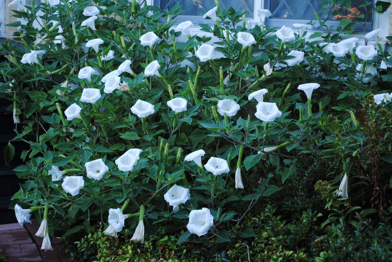 Plant These Fast Climbing Vines Gardening Summer Privacy Shade