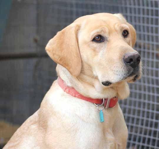 Alexa Carter Alexacarterert Labrador Retriever Golden Retriever Dog Accessories
