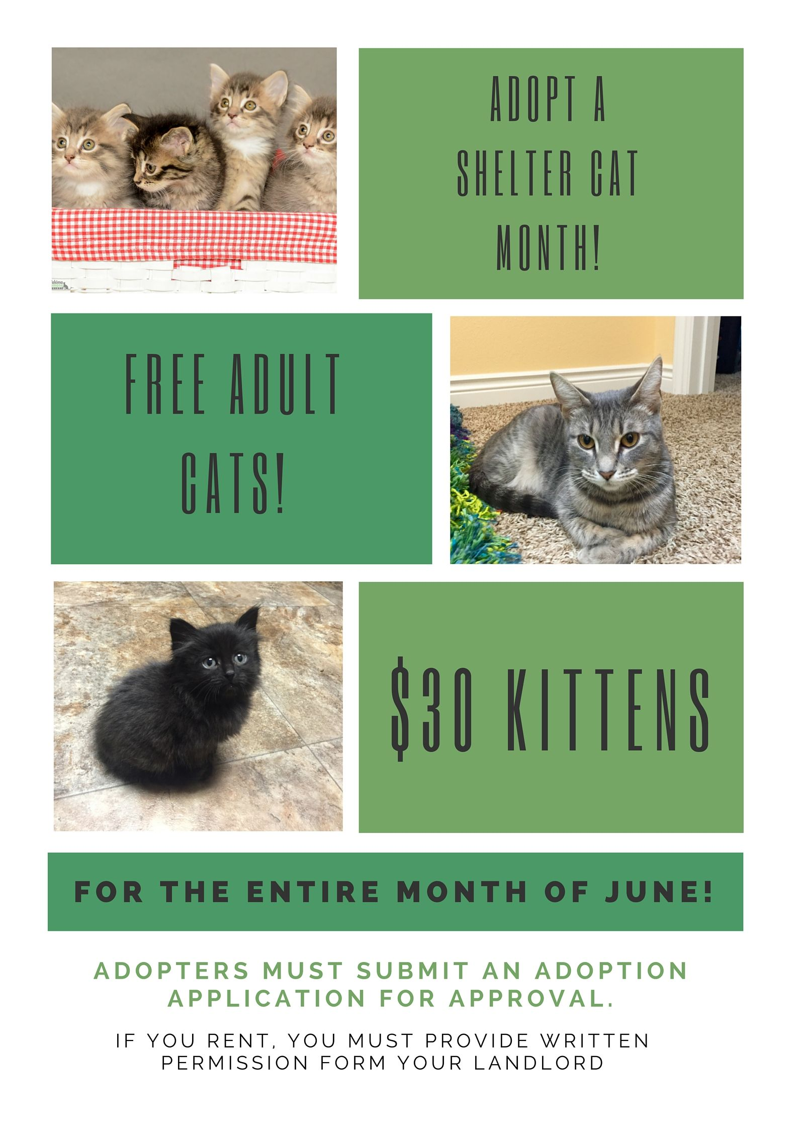 Free Kittens In Yakima : kittens, yakima, Special, Pricing, Event, Adopt, Shelter, Month, June., Yakima, Humane, Society, Your…, Society,, Shelter,, Animals