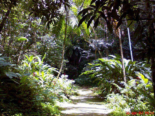 Barbados rainforest <3