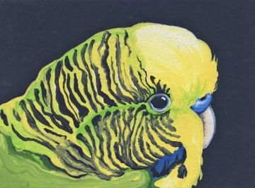 ACEO Parakeet Green Budgie Original Bird Art-Carla Smale