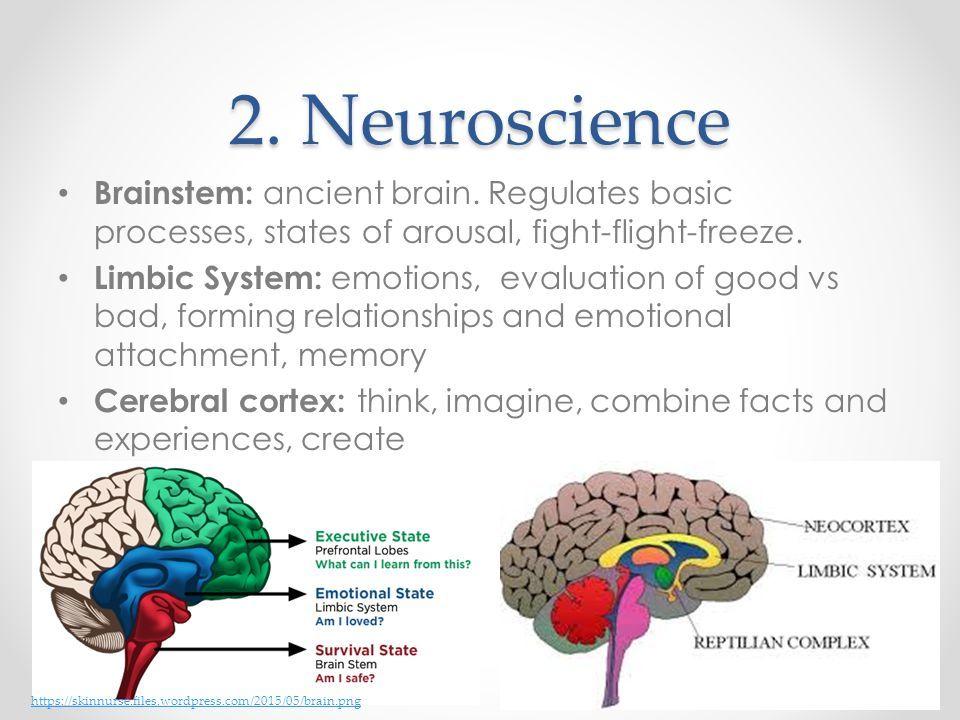 Image result for fight flight freeze brain worksheet | Brain