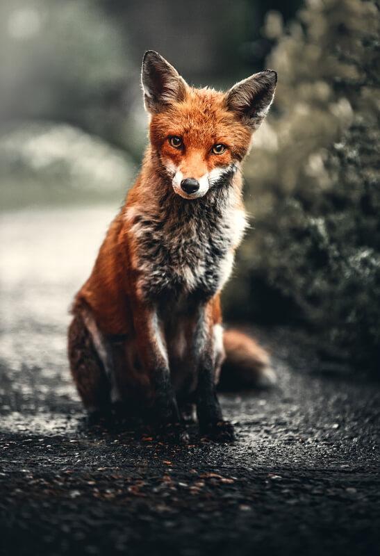 Optics On Safari - 10 of the Best Canon Lenses for Wildlife Photography - Ehab Photography