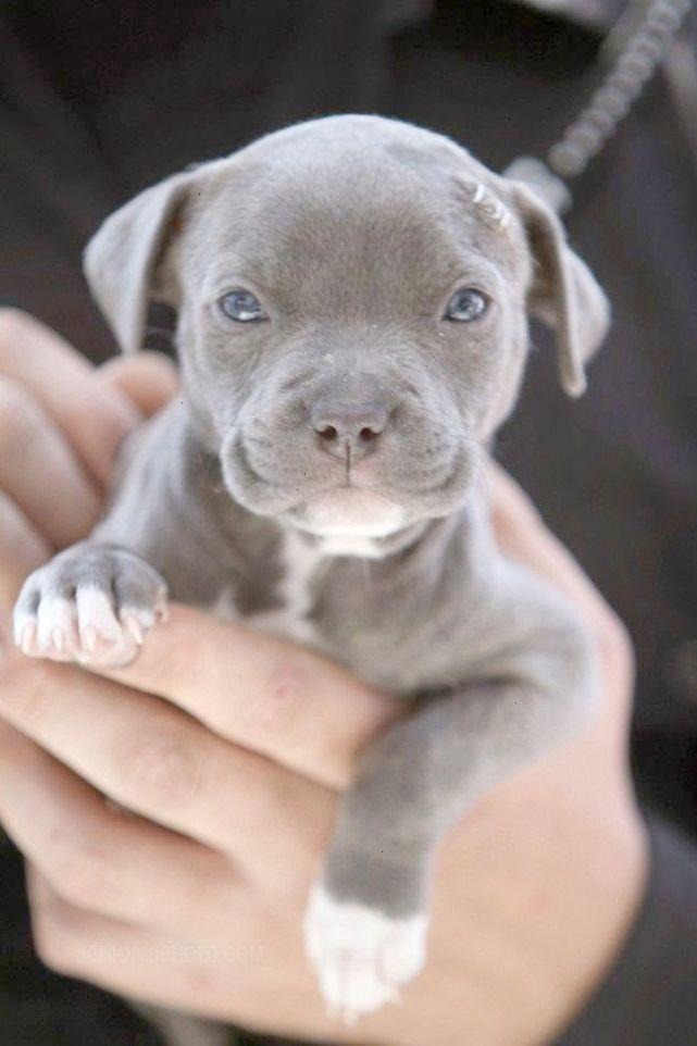 Brilliant Baby Animals For Sale Online Xoxo