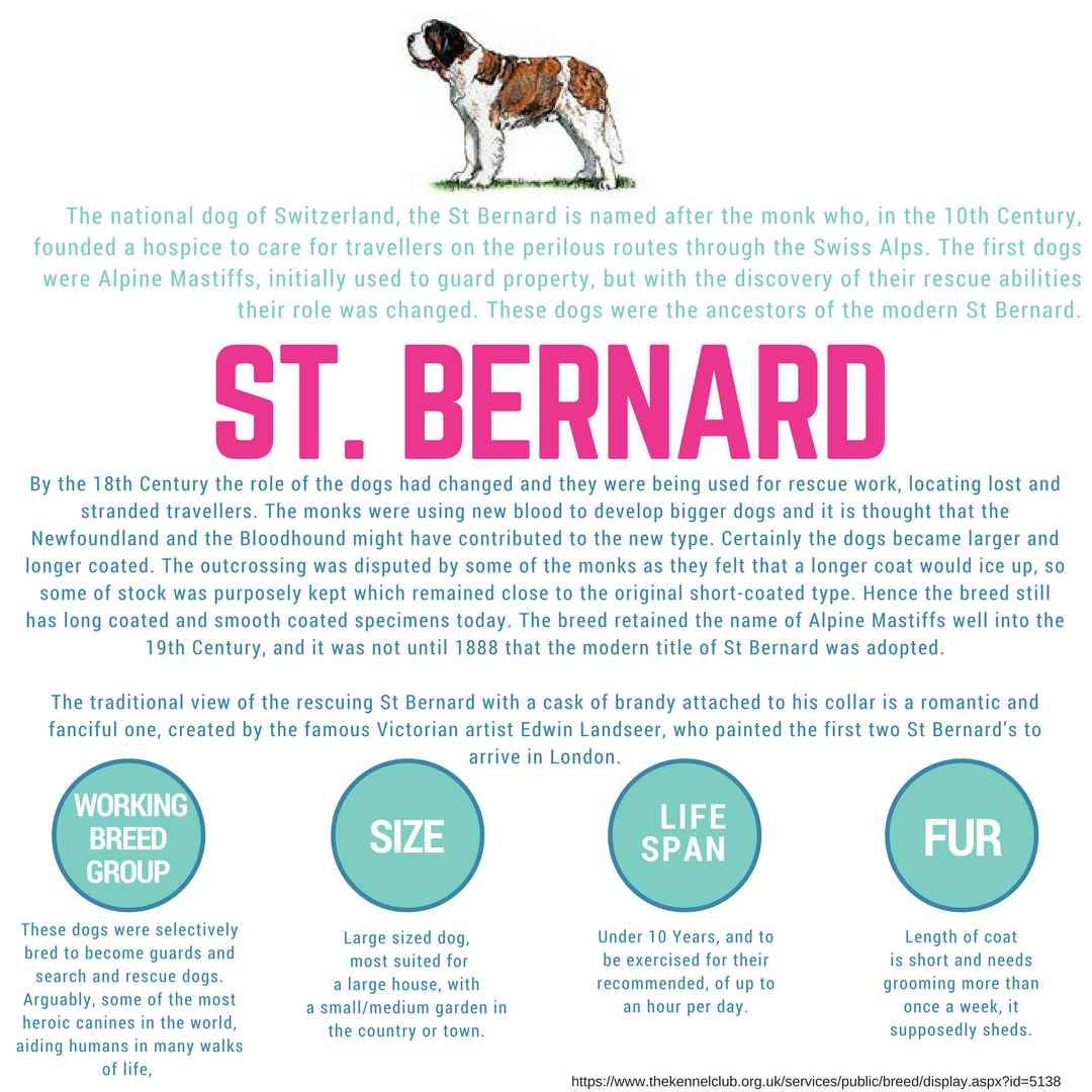St Bernard Dog Wednesdaywisdom Stbernard Dog Infographic St Bernard Dogs Dog Insurance Cat Insurance