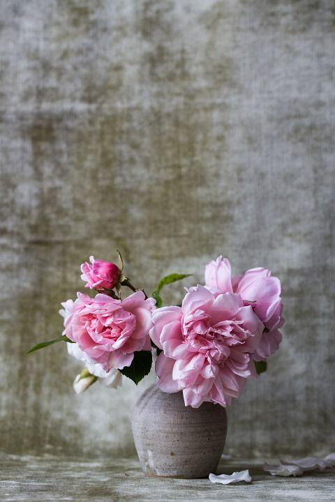 7fe0db1f2 Free Image on Pixabay - Roses