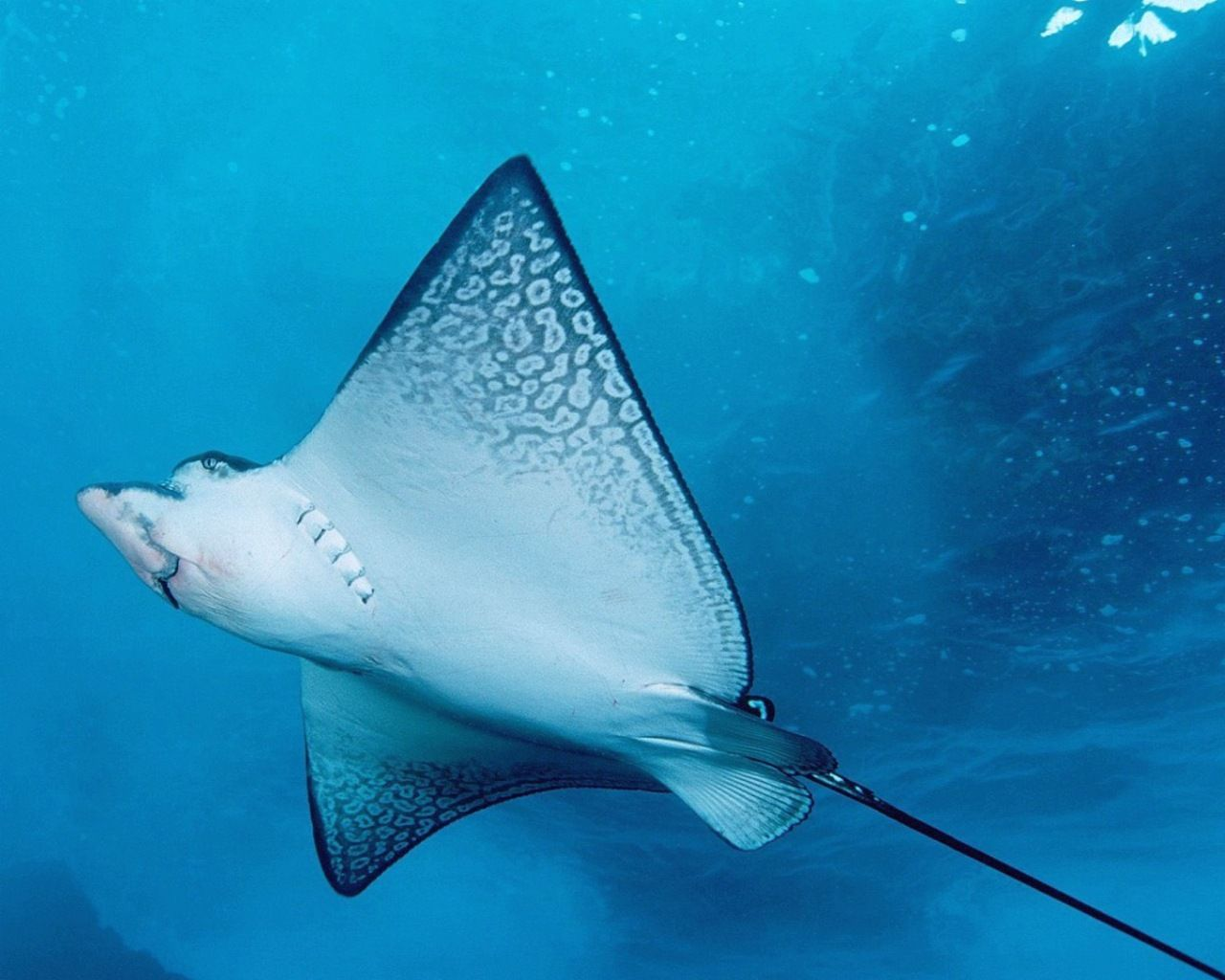 These animals are those that live in oceans and seas around the ...
