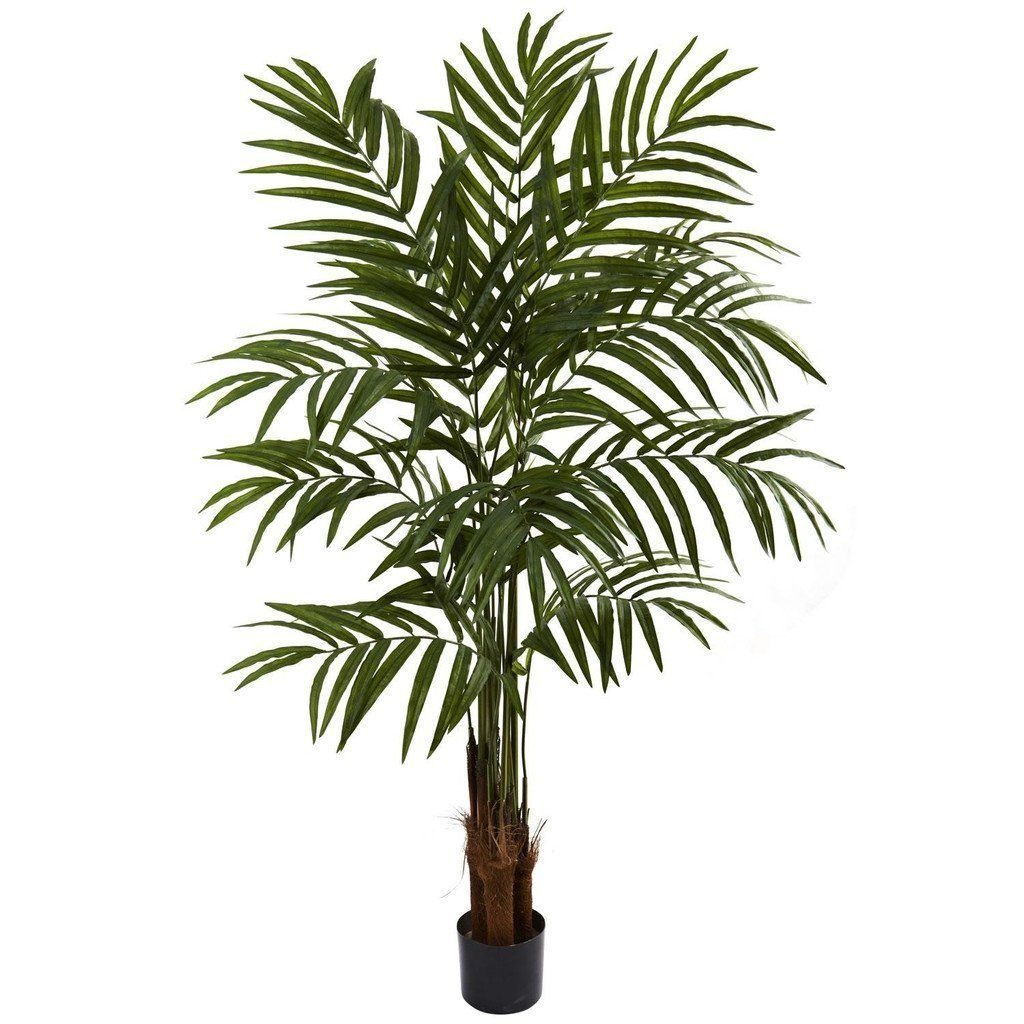5'' Big Palm Tree Potted palm trees, Potted palms