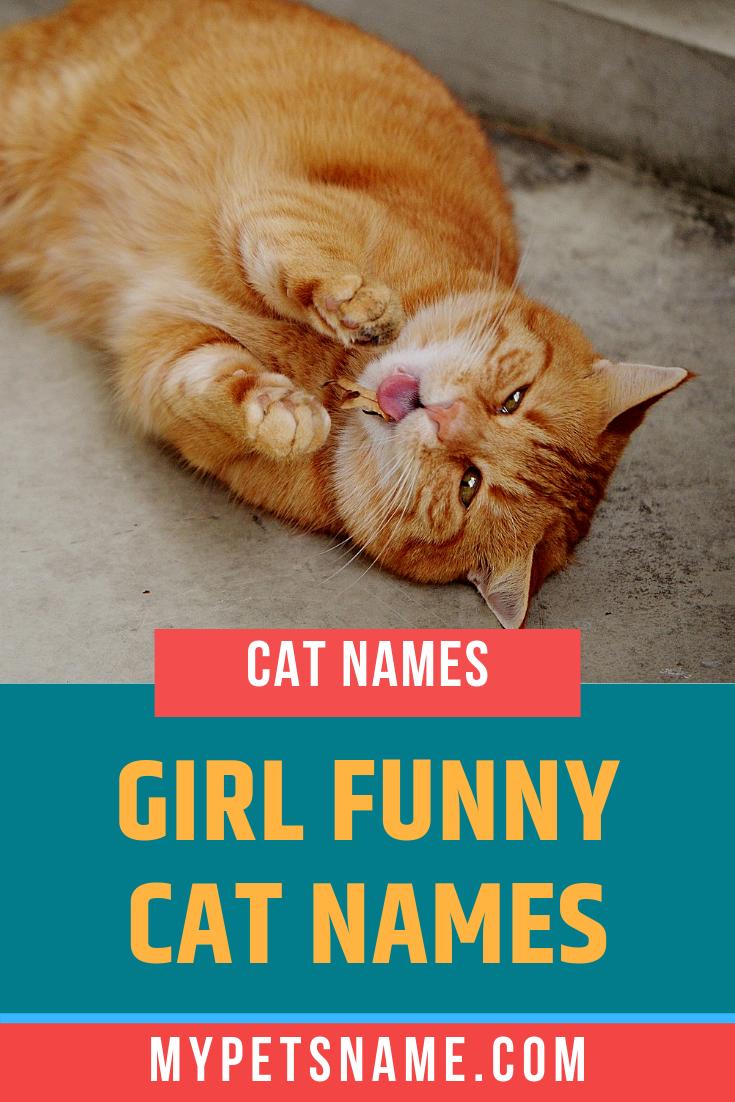 Girl Funny Cat Names Funny Cat Names Cat Names Funny Cats