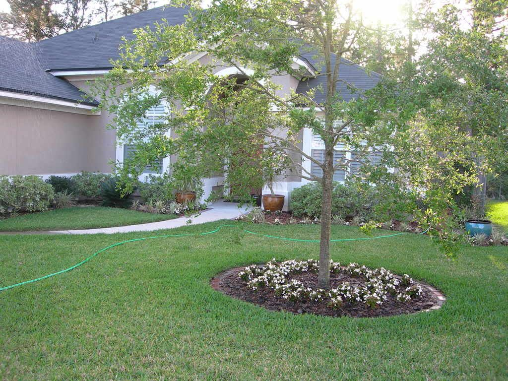 Cheap Yard Design Ideas | ... Design Forum   GardenWeb   Front Yard  Landscape