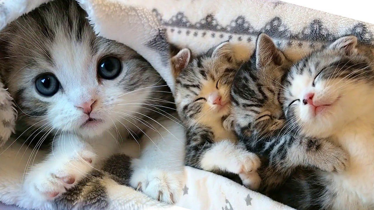 Pile Of Purrfect Cuddly Kittens Youtube In 2020 Cute Kitten Gif Kittens Cutest Cute Cats And Kittens