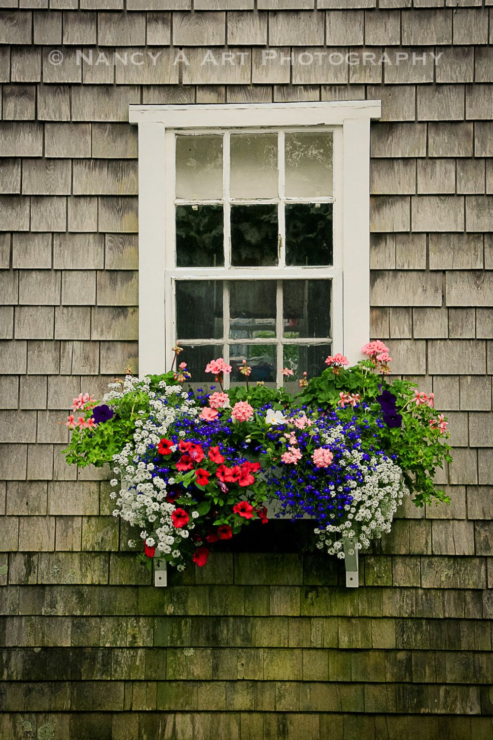 Items Similar To Flower Window Box Fine Art Photography Vintage Cottage Country Cottage Nantucket Cape Cod Flower Window Window Box Fine Art Photography