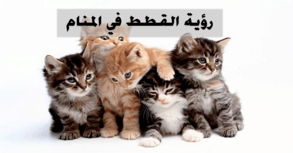رؤية القطط في المنام للمتزوجة والحامل والعزباء وللرجل Animals Cats