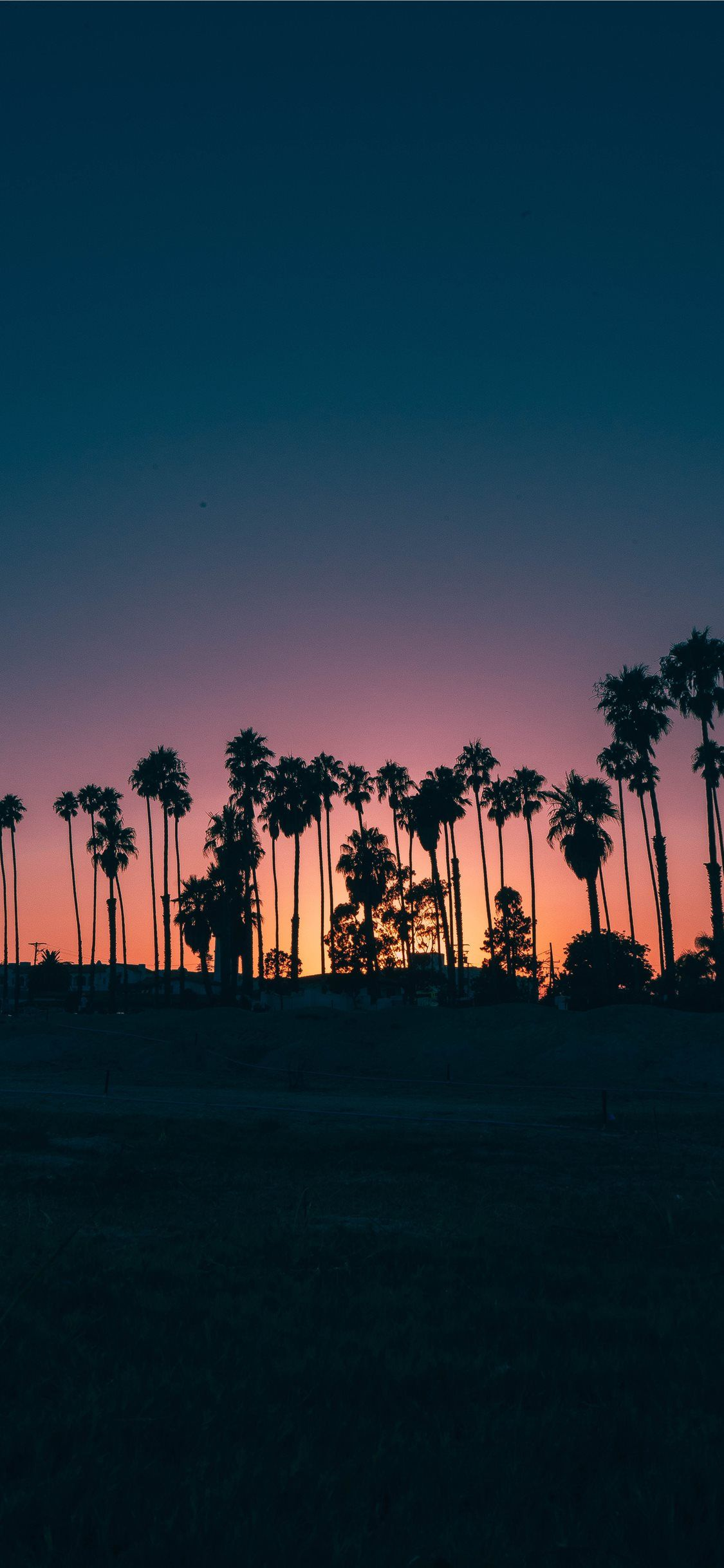 Palm Trees During Sunset Wallpaper Sunset Wallpaper Tree Sunset Wallpaper Palm Trees Wallpaper Palm trees sunset horizon sky clouds