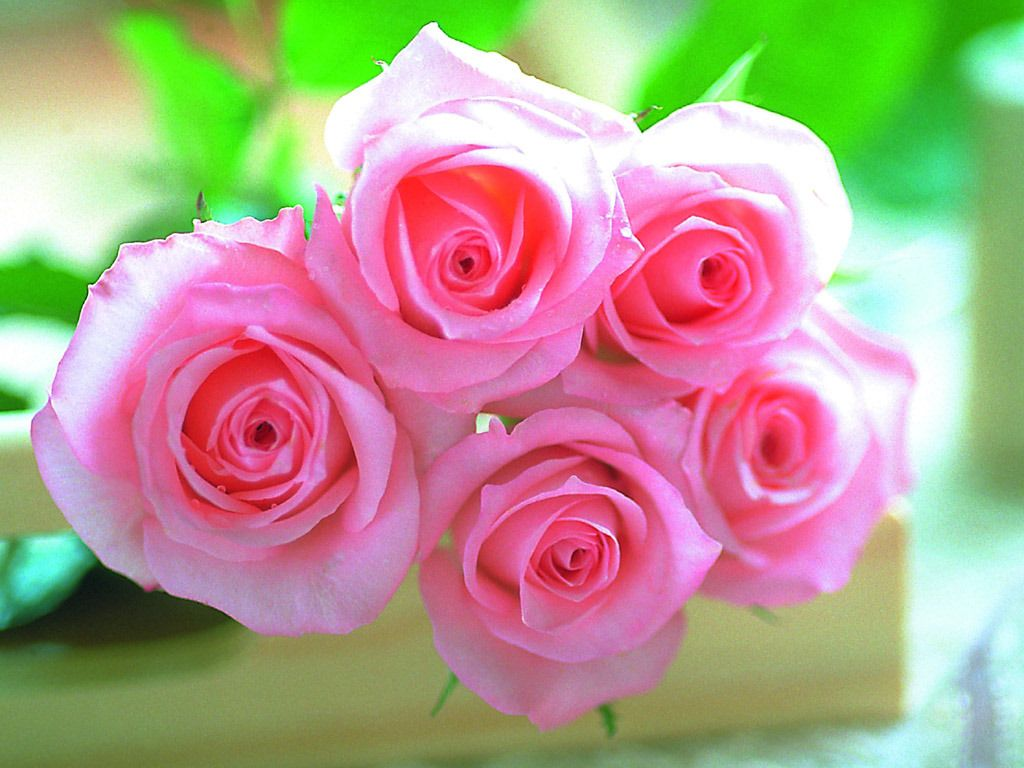Bet They Smell Great Pink Flowers Wallpaper Beautiful Pink Roses Pink Flowers