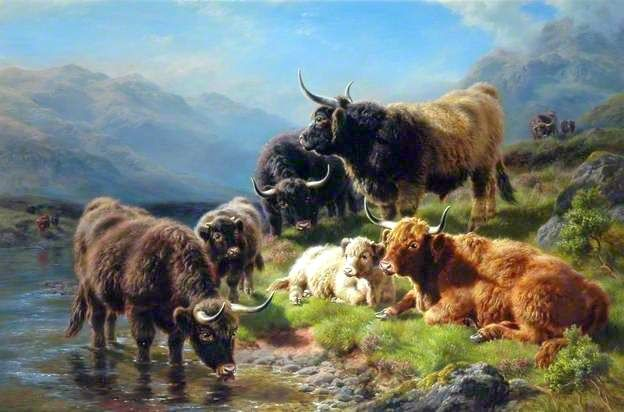 Pin by Robert Johnson on Art & Artist Highland cattle