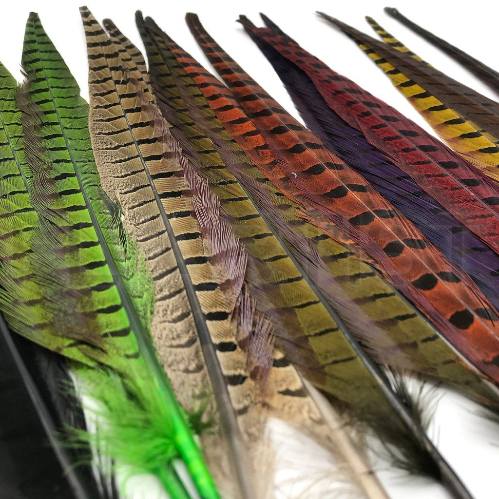 10 RINGNECK PHEASANT TAIL FEATHERS 8 TO 10 INCHES FOR FLY TYING