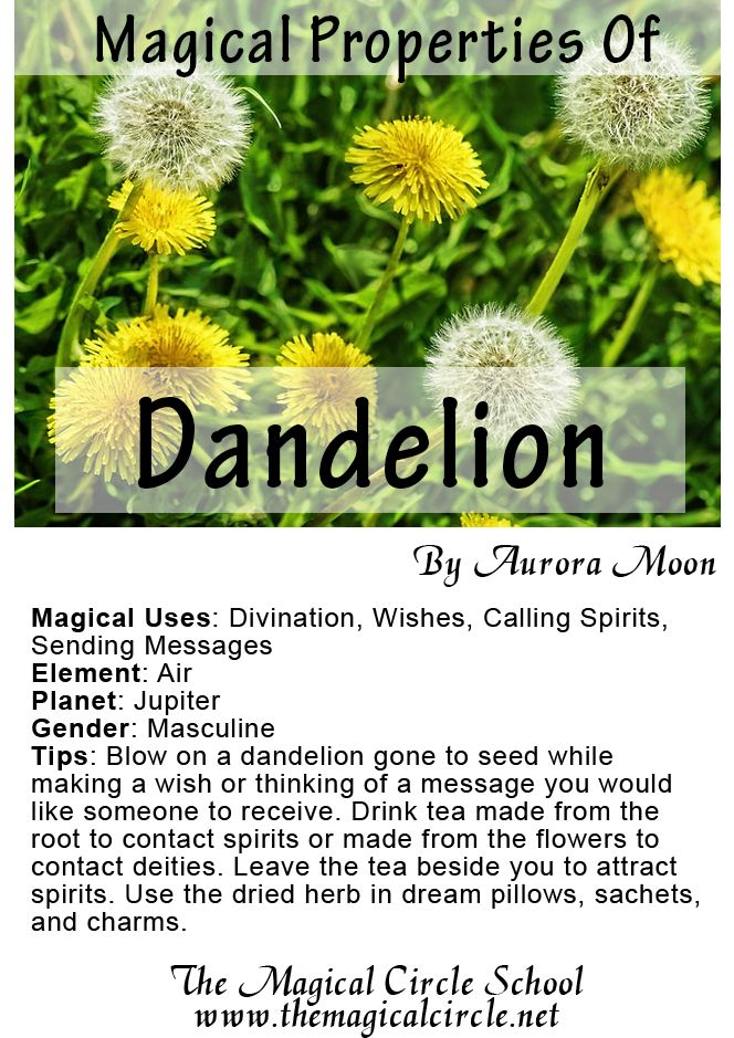 The Magical Properties Of Dandelion Created By Aurora Moon For The Magical Circle School Www Themagicalcircle Net Magic Herbs Herbal Magic Magickal Herbs