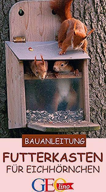 Photo of Eichhörnchen Futterkasten: Bauplan & Anleitung