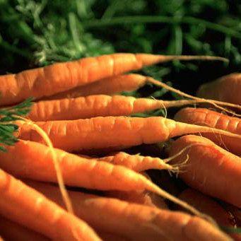 Organic Vegetable Seeds Carrot Seed Spring Winter