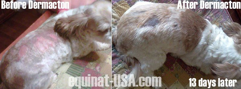 Dermacton Reviews Itchy Dogs With Red Sore Skin Hair Loss Get