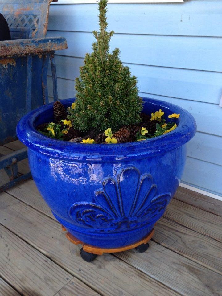 Container Garden Dwarf Alberta Spruce With Violas Used