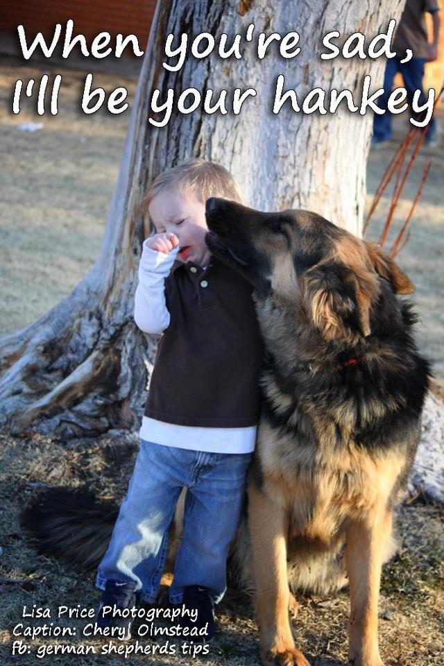 When you're sad... #german #shepherd #dog
