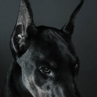 Anubis Aesthetic Tumblr Doberman Doberman Pinscher Dogs