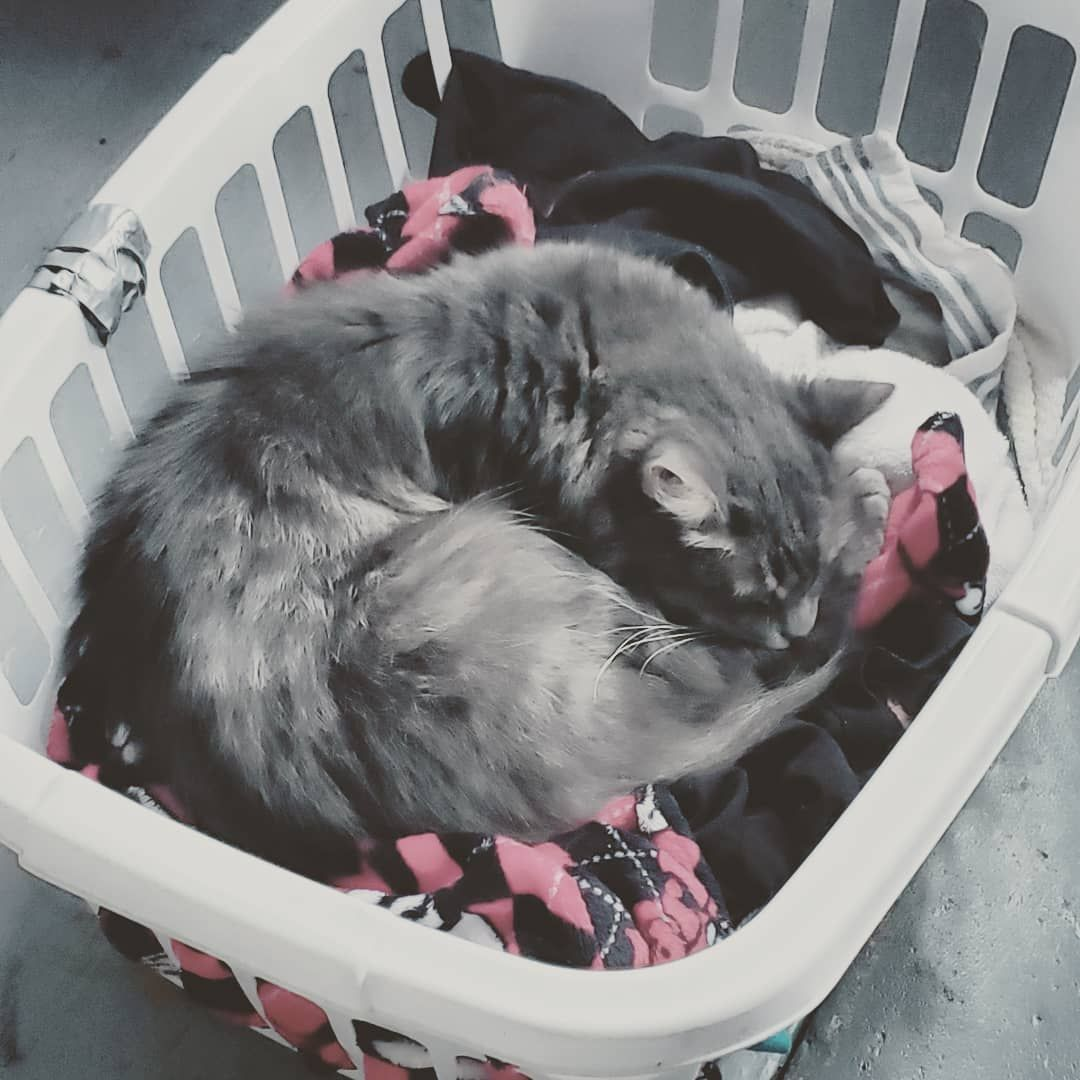 Yesss new laundry!! #cats #catsofinstagram #naps #adoptdontshop #rescue #cat #sleepy #kitty #love #sleepykitty Yesss new laundry!! #cats #catsofinstagram #naps #adoptdontshop #rescue #cat #sleepy #kitty #love #sleepykitty Yesss new laundry!! #cats #catsofinstagram #naps #adoptdontshop #rescue #cat #sleepy #kitty #love #sleepykitty Yesss new laundry!! #cats #catsofinstagram #naps #adoptdontshop #rescue #cat #sleepy #kitty #love #sleepykitty Yesss new laundry!! #cats #catsofinstagram #naps #adoptd #sleepykitty
