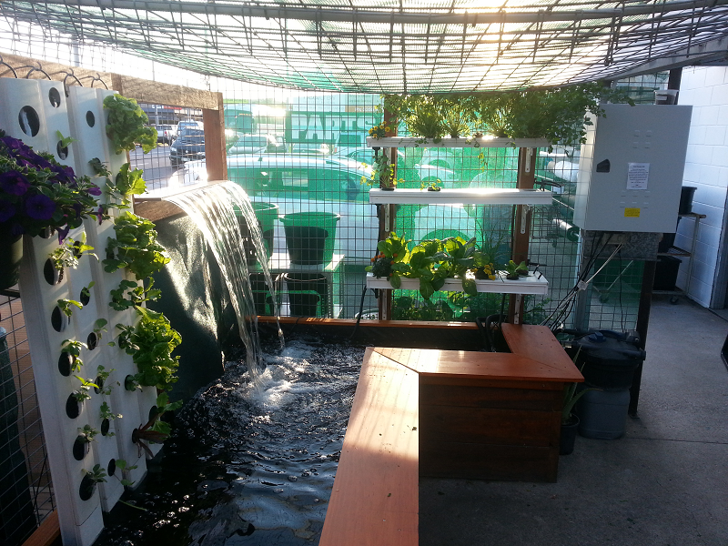Aqua gardening pond and waterfall aquaponics system for Garden pool aquaponics