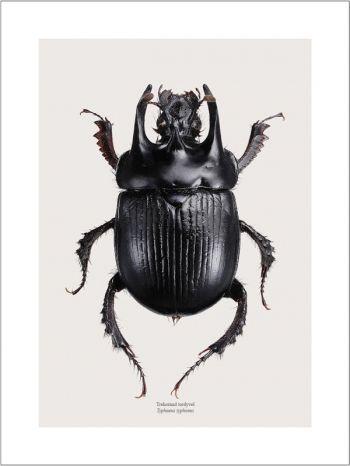 Beetle | Those little guys | Pinterest | Insectos, Escarabajo y ...