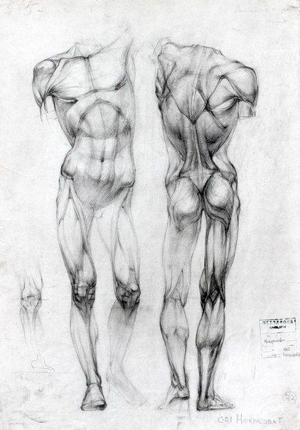 Anatomy Pinterest