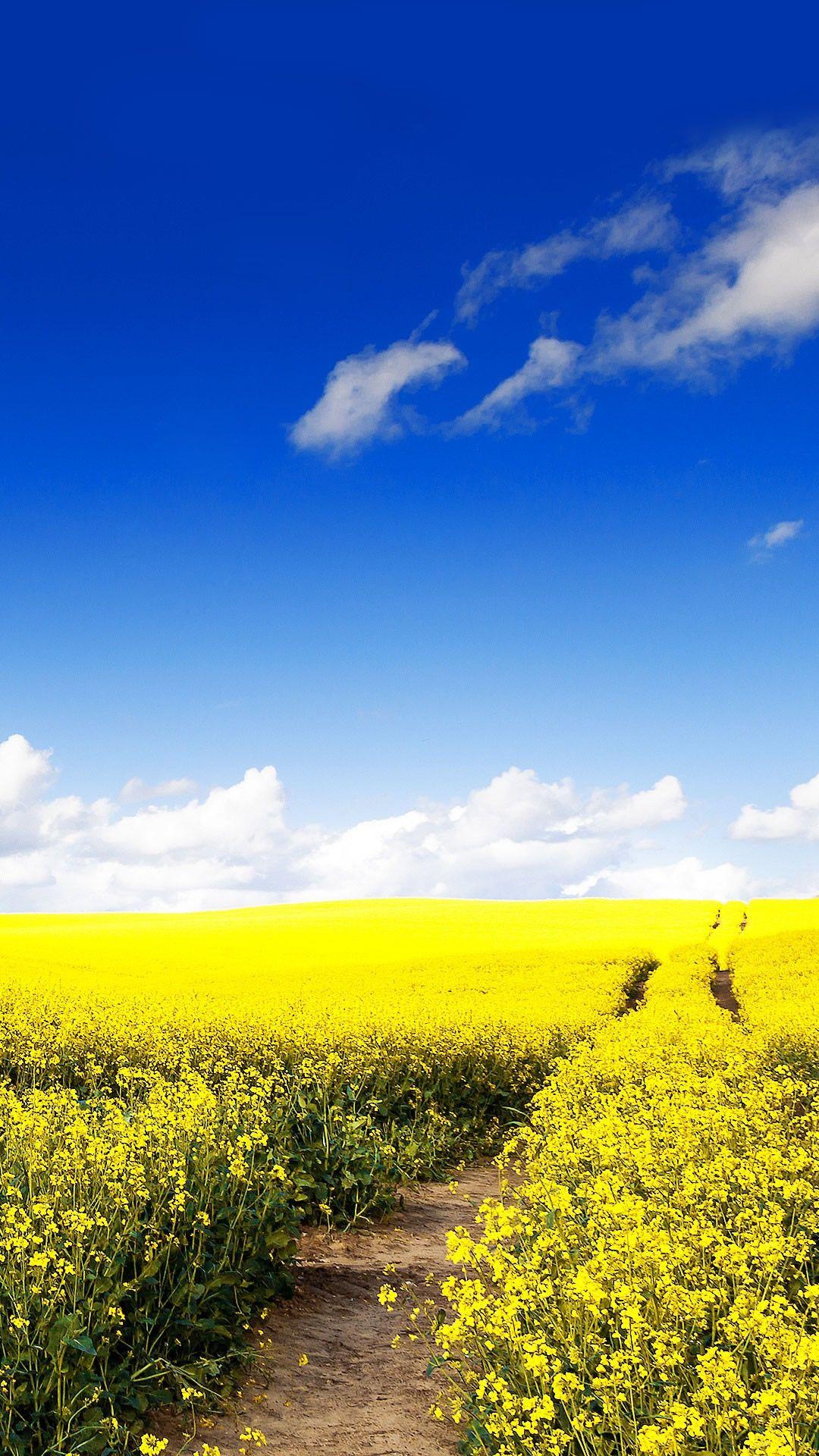 Blue Sky Canola Flower Garden iPhone 6 plus Wallpaper