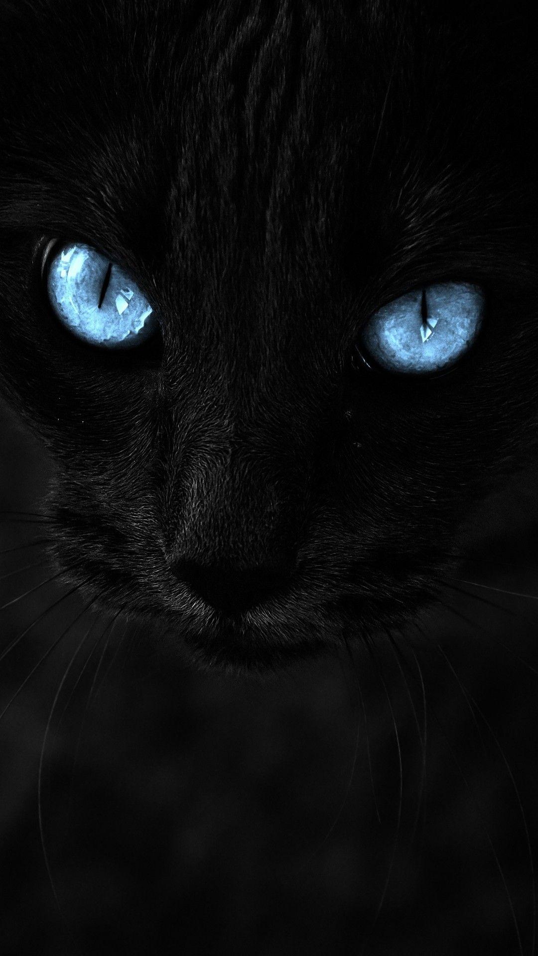 Black Cat Blue Eyes Cats Pretty Cats Beautiful Cats