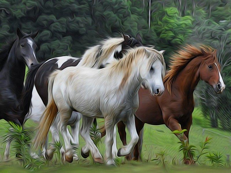 Les Fonds D Ecran Des Chevaux En Liberte Jolis Chevaux Peinture Cheval Animales