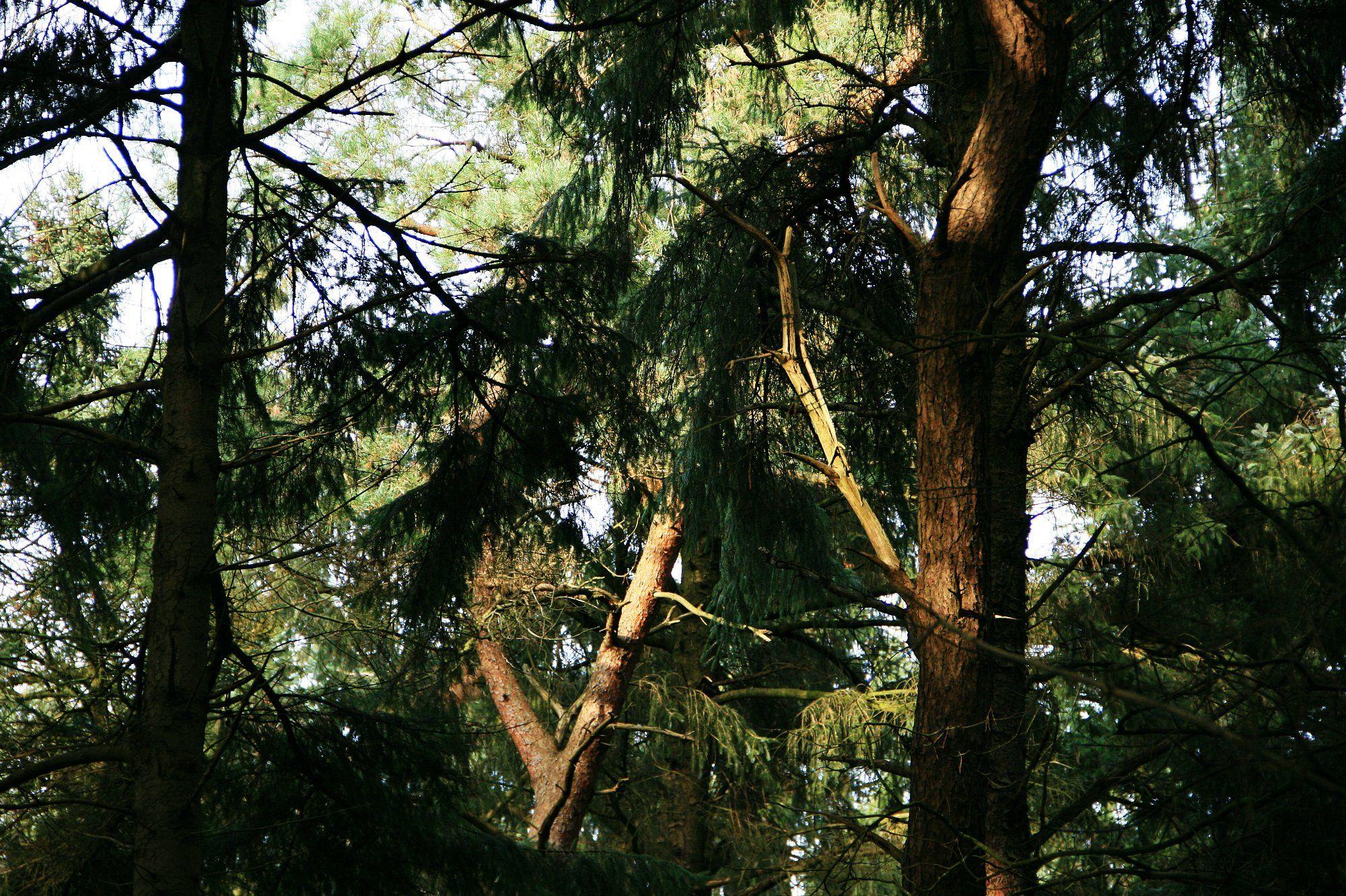 Die Sonne spielt mit den Bäumen