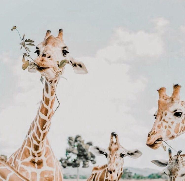 Pinterest Emafl1 Susseste Haustiere Ausgestopftes Tier Niedliche Tierbabys