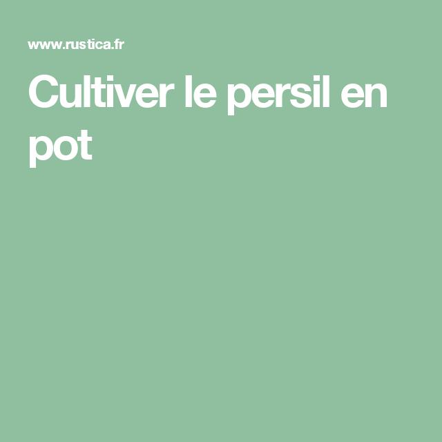 Cultiver Le Persil En Pot Jardins Pinterest