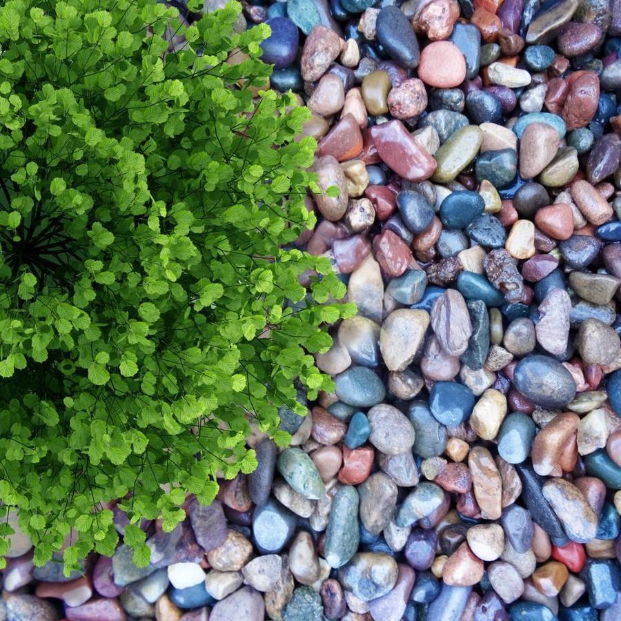 Colored Landscape Rock
