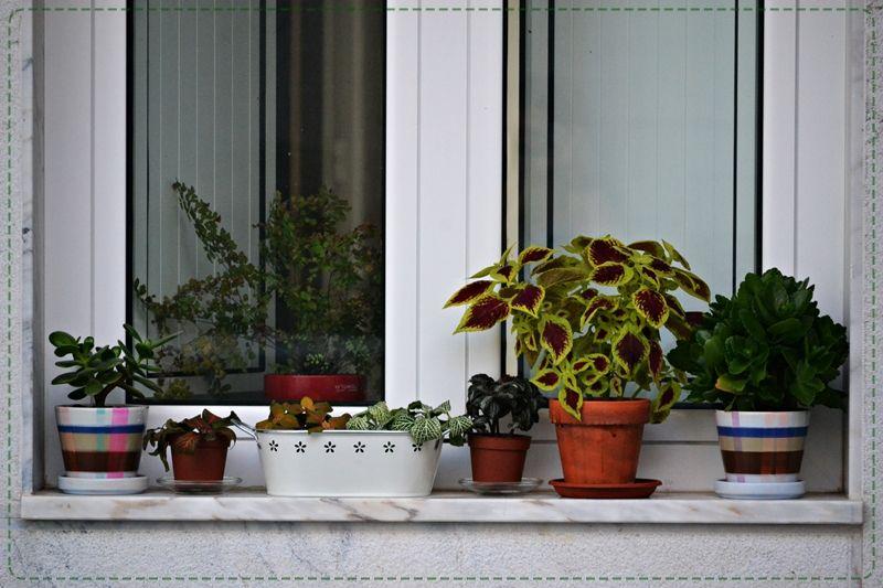 Meu pequeno jardim