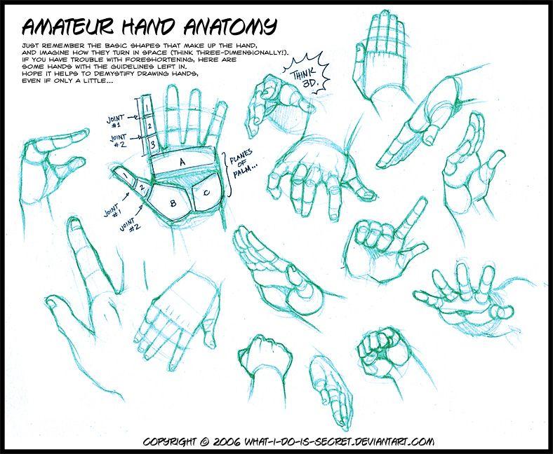Anatomy drawing tutorials