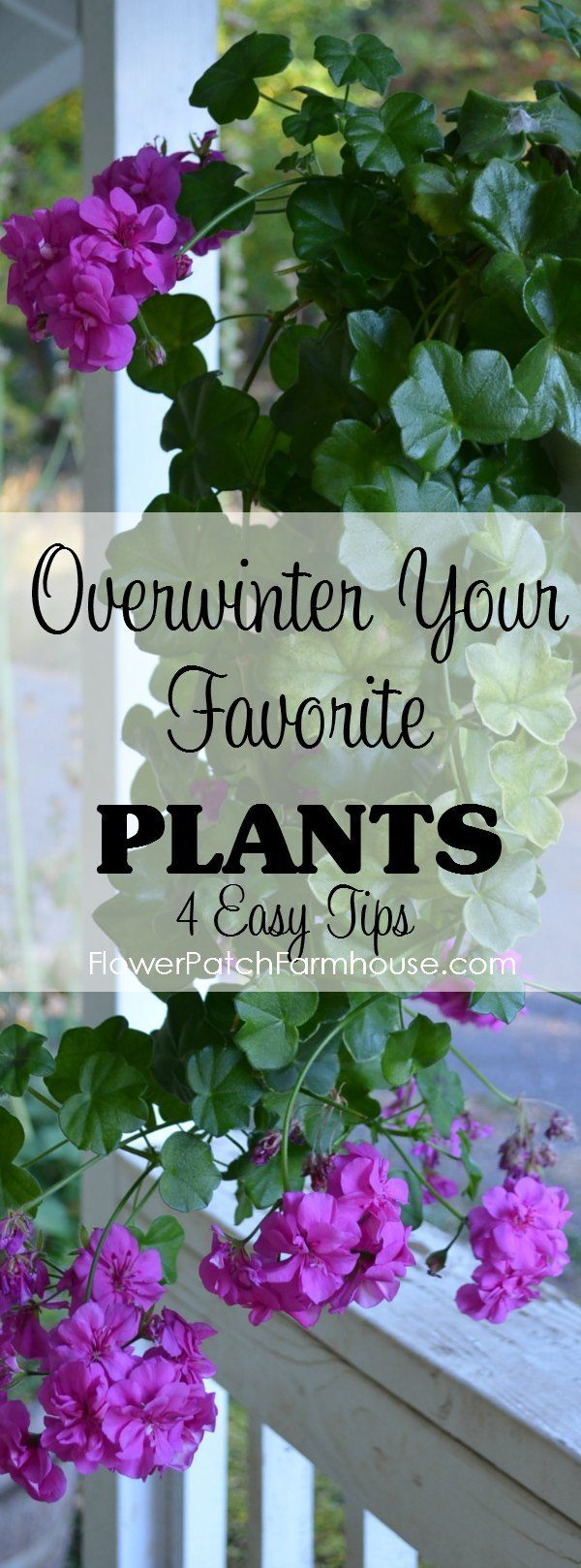overwinter your favorite plants winter colors plants and