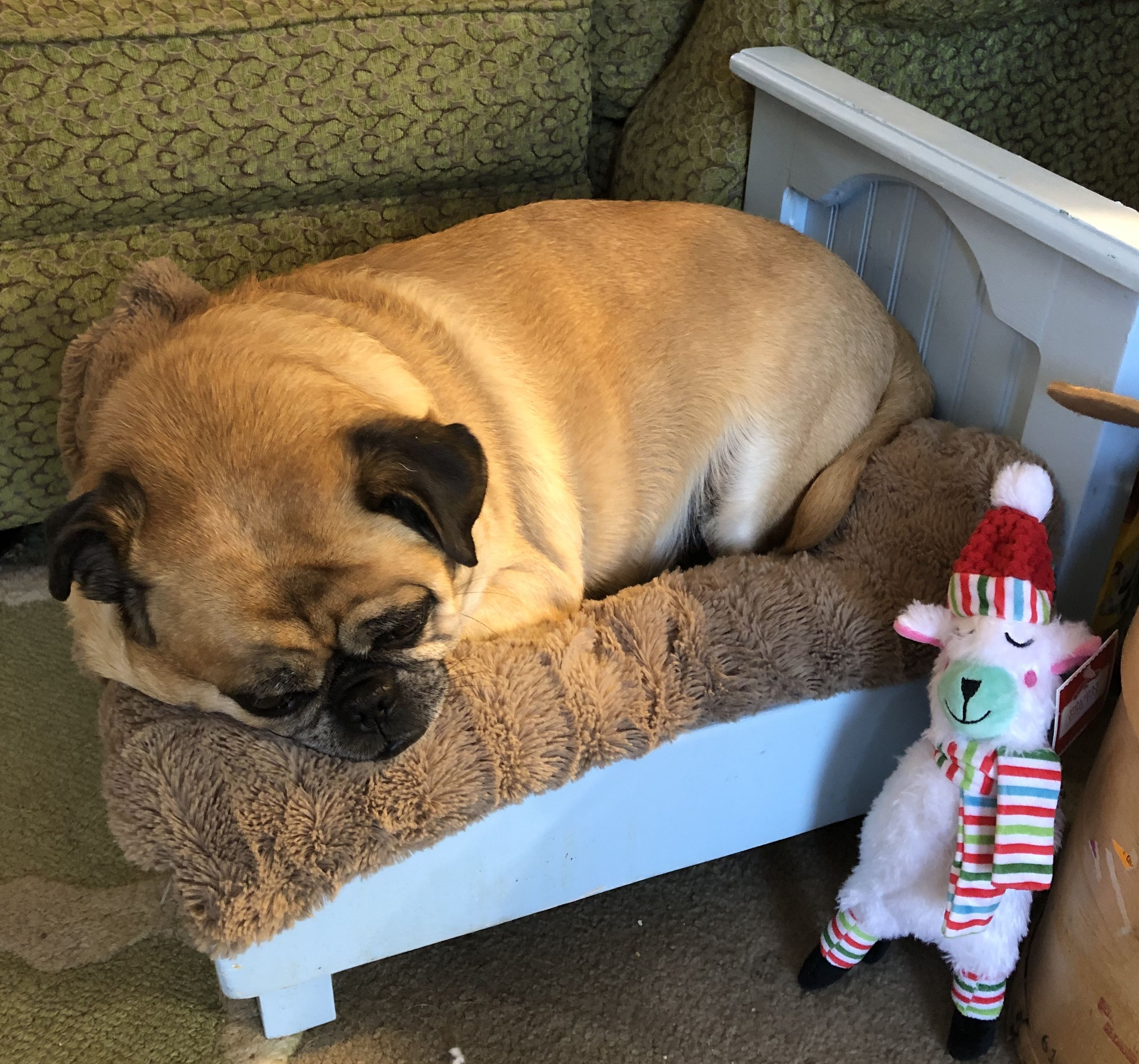 Pin By Terri Stafford On Stafford Grumble Of Pugs Family Baby